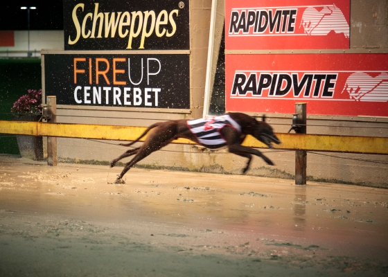 Wentworth Greyhound Park: Sydney, Australia