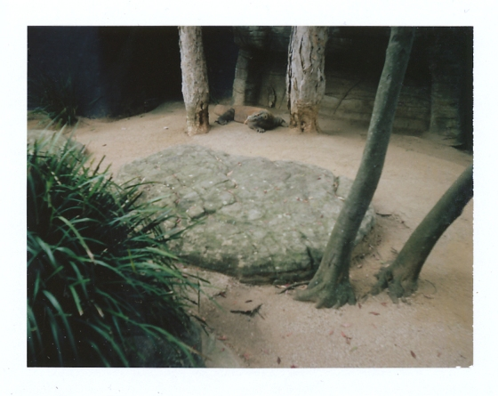 Polaroid of the Komodo Dragon at the Taronga Zoo: Sydney, Australia