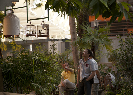 The last few loiterers at the Yuen Po Street Bird Garden in Kowloon, Hong Kong