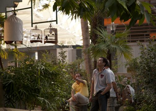 The last few loiterers at the Yuen Po Street Bird Garden in Kowloon, Hong Kong