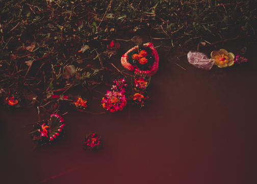 Krathong that washed up along the banks of the Ping River: Chiang Mai, Thailand