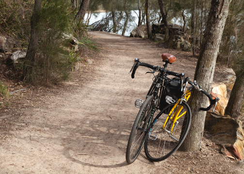 Bike path along the Narrabeen Lakes: Narrabeen, Australia