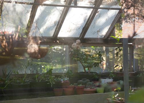 Old greenhouse at the Callan Park Mental Hospital: Sydney, Australia