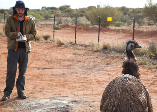 The parking lot emu at Curtin Springs: Northern Territory, Australia