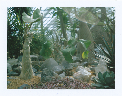 Polaroid of small crystal garden inside the Flower Dome: Gardens by the Bay, Singapore