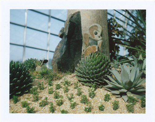 Polaroid of succulents inside the Flower Dome: Gardens by the Bay, Singapore