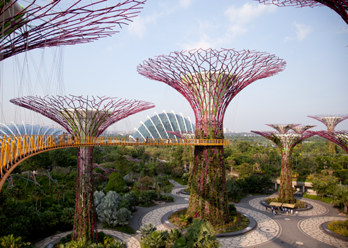 Supertree Grove: Gardens by the Bay, Singapore