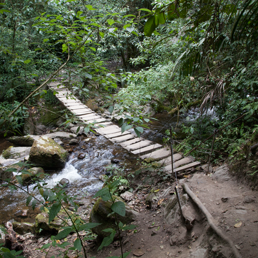 Bridge crossing in the Valle de Cocora: Salento, Colombia