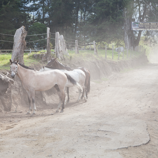 Horses outside the trail head of Valle de Cocora: Salento, Colombia