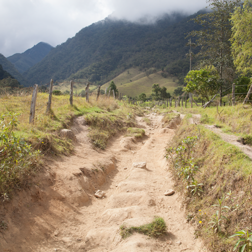 Rutted trail through the Valle de Cocora: Salento, Colombia