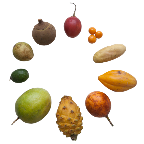 Colombian Fruit Review: Week 231 | The Lustrum Project