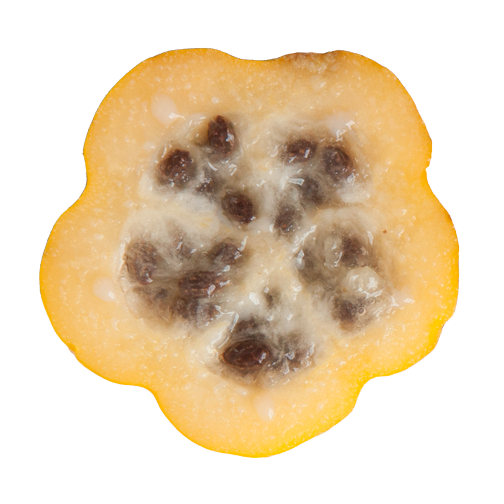 Tropical fruit in Colombia: Papayuela, sliced