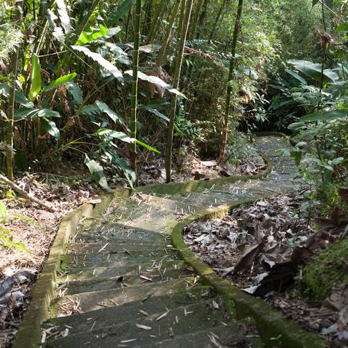 Steep staircase at Ecoparque Regional Alcázares-Arenillo: Manizales, Colombia