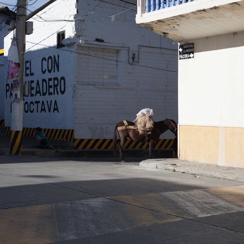 A horse loaded with goods in the quiet streets of Salamina, Colombia