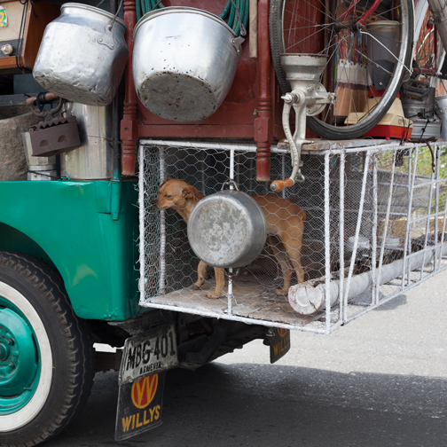 Yipao-Parade-Jeeps-with-caged-animals-on-the-back--Armenia,-Colombia