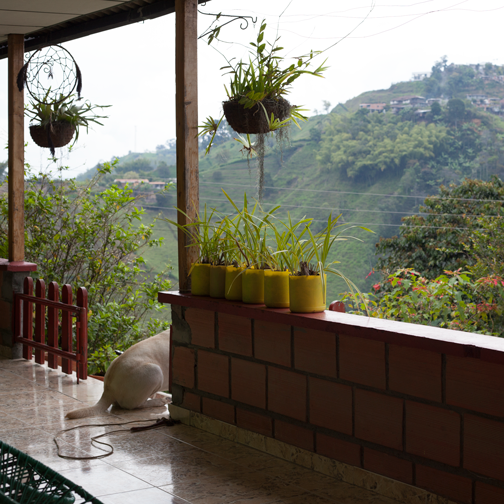 Patio of the Secret Garden Hostel outside Villa Maria: Manizales, Colombia