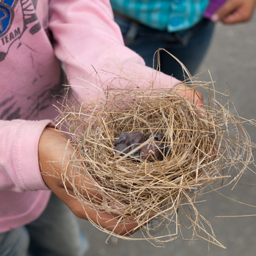 Andres holding the bird nest he found: Manizales, Colombia