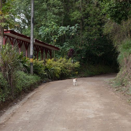 Dog on a quiet dirt road outside Villa Maria: Manizales, Colombia