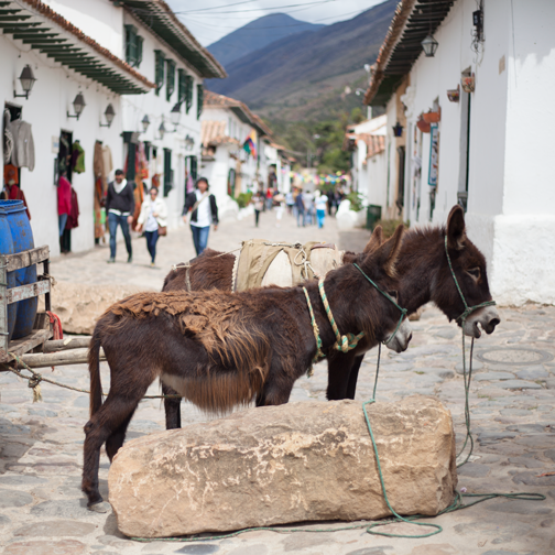 Donkeys on the cobblestone streets of Villa de Leyva: Colombia