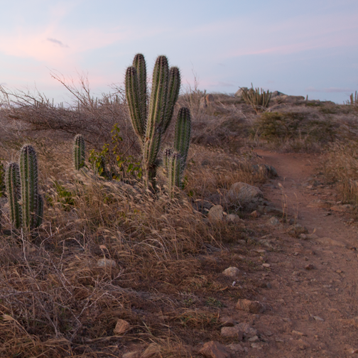 Cacti sunset near the Alto Vista Chapel: Aruba