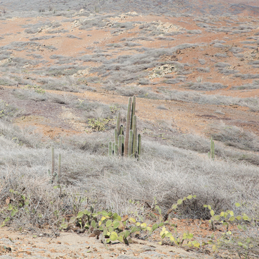Desert landscape at Arikok National Park, Aruba