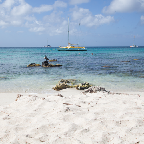 The blue waters of Malmok Beach: Aruba