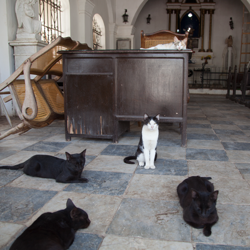 Stray cats lounging the in cemetery chapel in Mompos: Mompox, Colombia