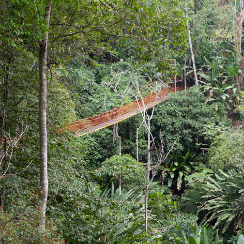Suspension bride at the Quindio Botanic Garden: Calarca, Colombia