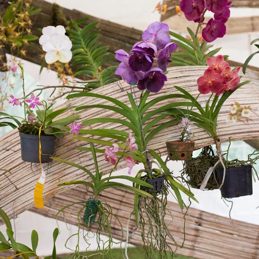 Orchid Festival at Recinto del Pensamiento: Manizales, Colombia