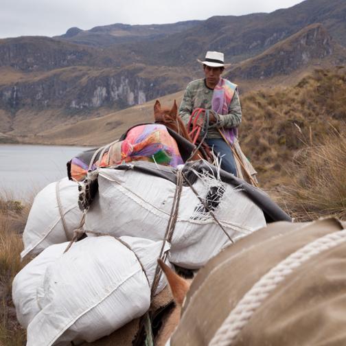 Parque-los-Nevados-Horse