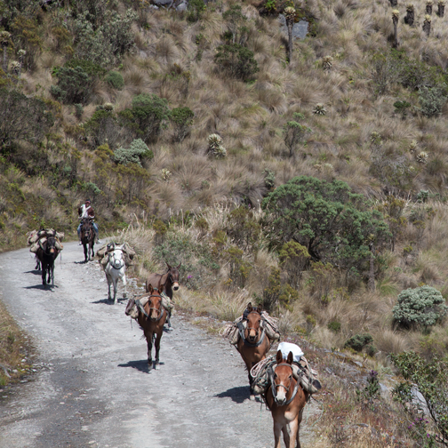 Nevado del Ruiz Horses on the Murillo turn-off: Manizales, Colombia